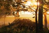 Vignes au matin