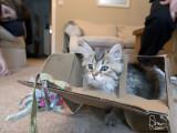 Babycat!