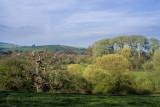 Spring trees near Killerton