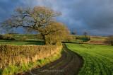 Late light on rural Mid Devon