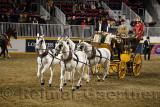 White horses at Green Meadows Four in Hand Coaching Class performance at The Royal Horse Show Ricoh Coliseum Exhibition Place To
