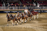 Double S winners of the Belgian Six Horse Hitch competition at The Royal Horse Show at Ricoh Coliseum Exhibition Place Toronto