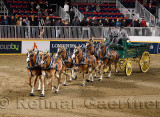 Lor-Rob Farms at the Belgian Six Horse Hitch competition at The Royal Horse Show at Ricoh Coliseum Exhibition Place Toronto