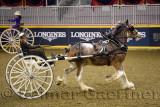 Woman driving a draft horse at the NASHHCS Classic Cart Series at the Royal Horse Show Ricoh Coliseum Exhibition Place Toronto
