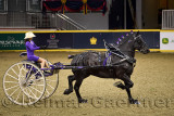 Hannah Deer with black Percheron draft horse winner at NASHHCS Classic Cart Series at the Royal Horse Show Ricoh Coliseum Toront