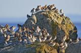 Shore bird mountain