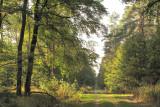 la forêt de chênes