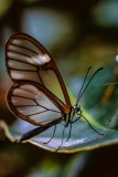 butterfly_wonderland_