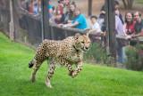 Dallas Zoo Photo Safari, March 18, 2017