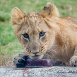Photos from the September 16, 2017, Photo Safari at the Dallas Zoo