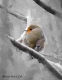 Vögel  / Birds