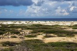 Aruba's rocky and sandy coast