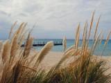 Small pier and sea grasses at Grand Turk