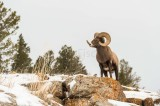Yellowstone NP 20180118_0577.jpg