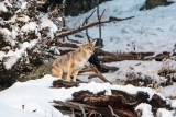 Yellowstone NP 20180120_1239.jpg