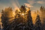 Winter in Yellowstone 2018