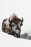 Yellowstone NP 20180122_1433.jpg