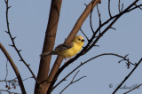 Birdtrips & Wildlife Expeditions