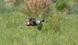 Latest bird pictures from Sweden