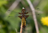 Latest dragonfly pictures