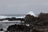 Birds in Azores - Landscape