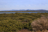 Looking towards Wilsons Promontory National Park