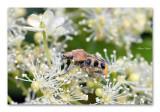 Kevers / Bugs