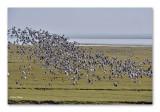 Groningen natuurgebied aan de Waddenzee