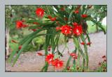 Epiphyllum basket