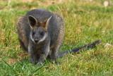 Cool Creatures in Australia - 2017