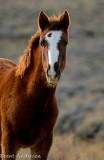 2014-11-05 D810 horses_0176 copy.jpg