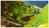 Teiche - Ponds -Tiere - Animals - Plants - Pflanzen
