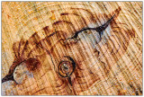 Holz - Wood - Timber