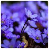 Flowers - Blossoms - Plants    - Blumen, Blüten, Pflanzen - Bäume