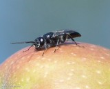 Bees, Wasps,Sawflies and Ants (Order: Hymenoptera)  of the Reveler Conservation Area