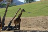 2016-11-02_San_Diego_Zoo_Safari_Park--0350--_RLH7100.jpg