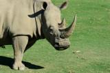 2016-11-02_San_Diego_Zoo_Safari_Park--0460--_RLH7134.jpg