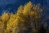 2016-11-08_Yosemite--1140--_RLH3203.jpg