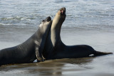 2016-11-10b_Coast_and_Elephant_Seals_N_of_San_Simeon--1340--_RLH7515.jpg