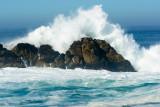 2016-11-12a_Pebble_Beach__17-Mile_Drive--1700--_RLH7635.jpg