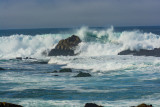2016-11-12b_Lighthouse_Point__Pacific_Grove__Surf_Scotters__Whales--1760--_RLH7661.jpg