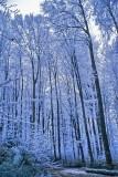 Frozen Ghosts of Winter