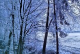 Snowy Forest And Fields