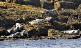 The Marbled Seals Colony