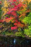 Milford Creek Autumn