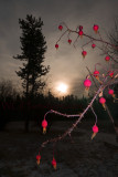 Sunrise Berries Silhouettes