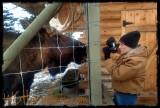 Avis Moose Hunting