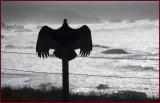 Vulture Silhouette