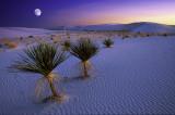 White Sands Moonlight