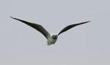 Birdtrip to Mauritania April 2018